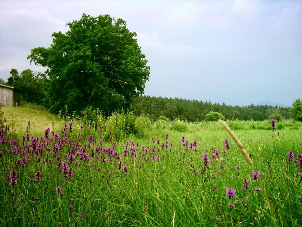 Gewitterabend im Naturschutzgebiet Osterseen, Position östlich des Nordende des Großen Ostersees, Blick nach Süden.